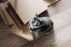 Birdseye view of cat sitting on flattened cardboard boxes and looking up at camera